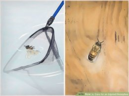 Image titled look after an Injured Honeybee Step 2