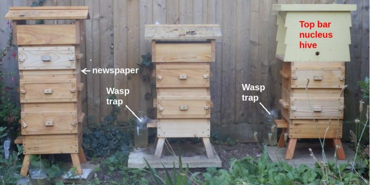 warre hive management