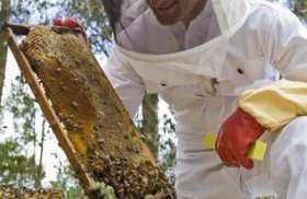begin a beekeeping business with an agricultural or conservation grant.