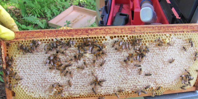 Worcester County Beekeepers