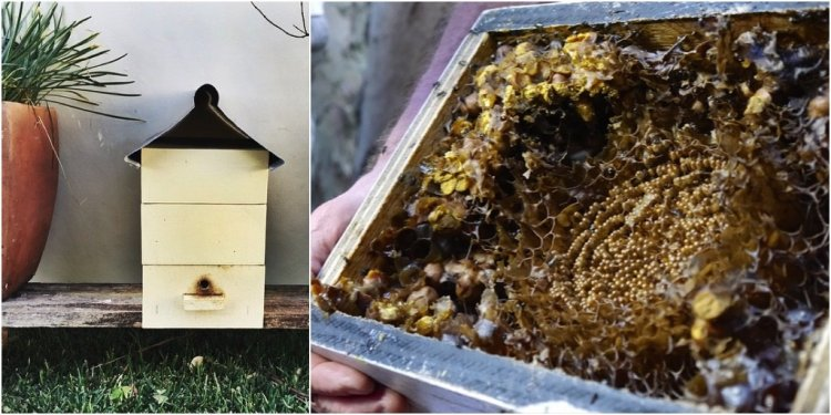 Stingless Beekeeping