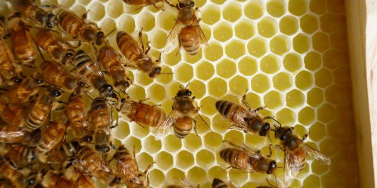 How to start honey bees?