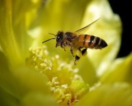 Apiculture pictures