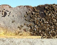 Beekeeping hives for Sale
