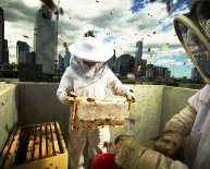 Beekeeping in urban areas