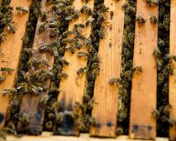Beekeeping Supplies Online