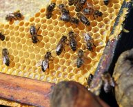 Books on Beekeeping