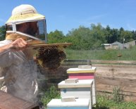 Chester County Beekeepers
