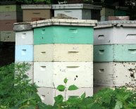 How to Build Bee Hives?