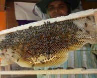 How to start honey bees Farming?