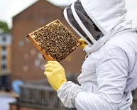 London Beekeepers Association