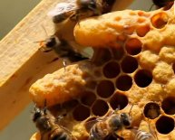Pictures of Apiculture