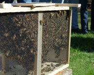 Plymouth County Beekeepers