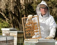 Project on Apiculture