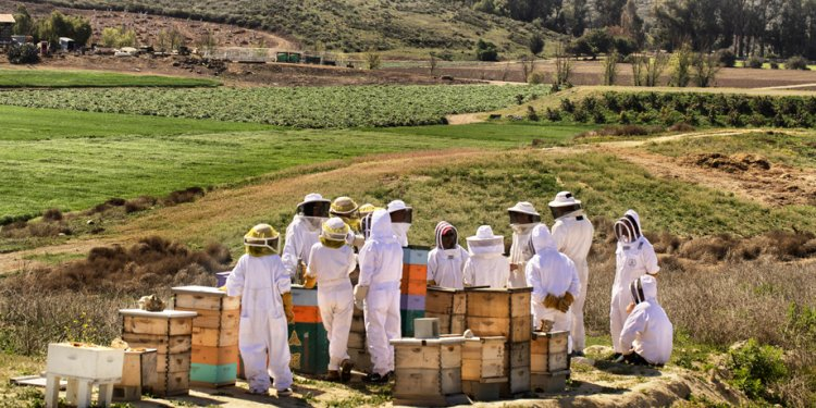 Beekeepers Los Angeles