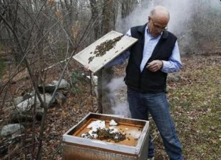 Wayne Andrews, an associate of this Briston County BeeKeepers Association, displayed the bees in his hive at their home in North Dighton.